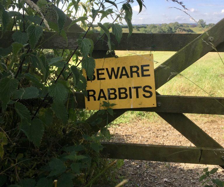 Beware Rabbits and Greenscombe